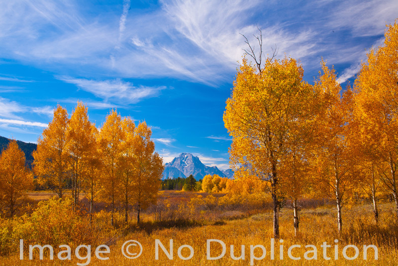 Mount Moran Aspens, Grand Teton National Park