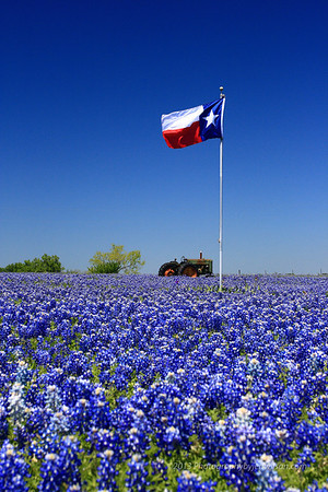 Texas-Flag-Bluebonnets
