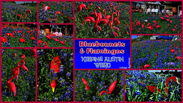 At the NE corner of 360 and Bee Cave Rd in Austin, TX is a nursery called Pots and Plants Garden Center.  It's known for the hundreds of Pink Flamingos on the hillside that beckon you to rubberneck.  On this day in early April 2010, I caught the perfect mix of Flamingos, Bluebonnets and giant Easter Eggs. Enjoy and please share :)