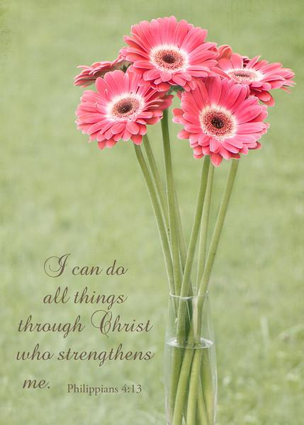 Philippians 4:13 - Gerber Daisies