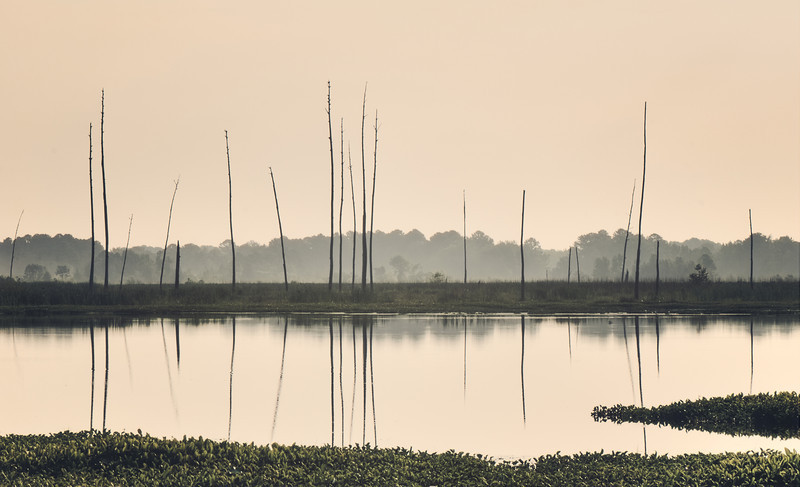 Morning Calm - I took this image at the Ross Barnette Reservoir in the Wildlife Management Area.