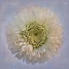 White Textured Flower