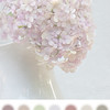 Hydrangea - Color Board