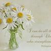 Philippians 4:13  - White Daisies