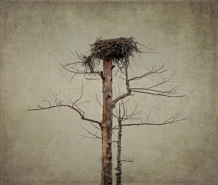 Montana Osprey Nest