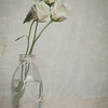 White Roses - This is another image that I think would well with a favorite verse, quote or single word applied to it.