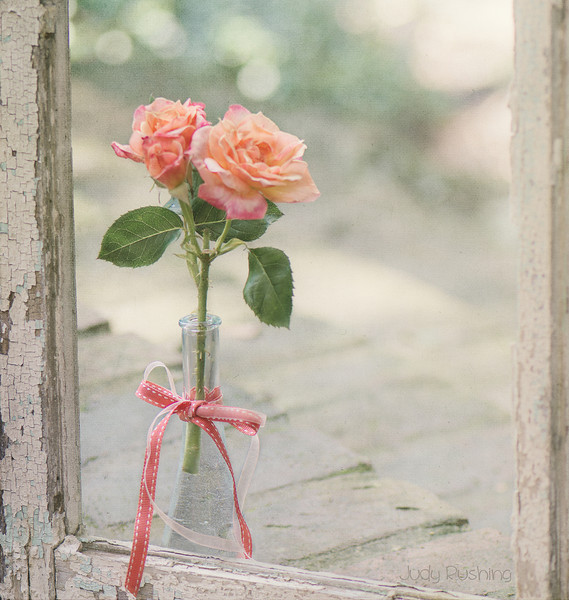 Roses in a Window