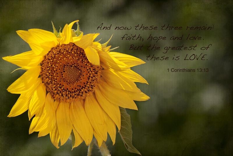 Sunflower - 1 Corinthians 13:13