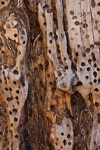 Old piece of oak