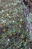17  Winter Blossoms