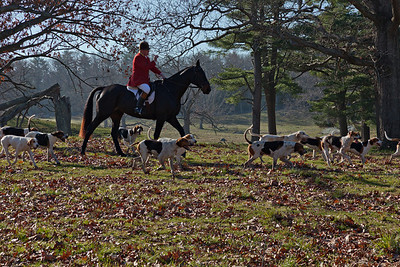Hunt Master with the Hounds