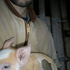 Moi holding a piglet! Moody lighting!