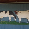 This is a small (only 8 feet long) bit of signage my father created for my grandmother's dairy prior to its closing in 1998.  This is protected under the the eaves.