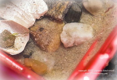 Seashore Treasures In Water