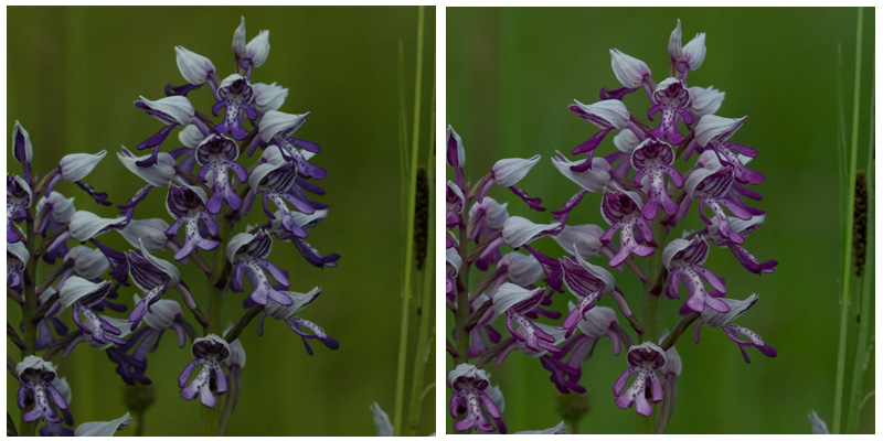 Some comments on the Naturescapes.net site pointed to the importance of having the white balance the same. The example on the left is from one and the same shot (RAW + small jpeg). The jpeg (left) again deviates from the converted RAW (right). During the conversion, I kept the in-camera default settings...
