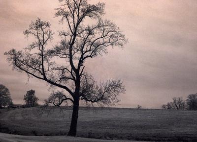 """""""Lone Star, Winterthur, Delaware"""""""
