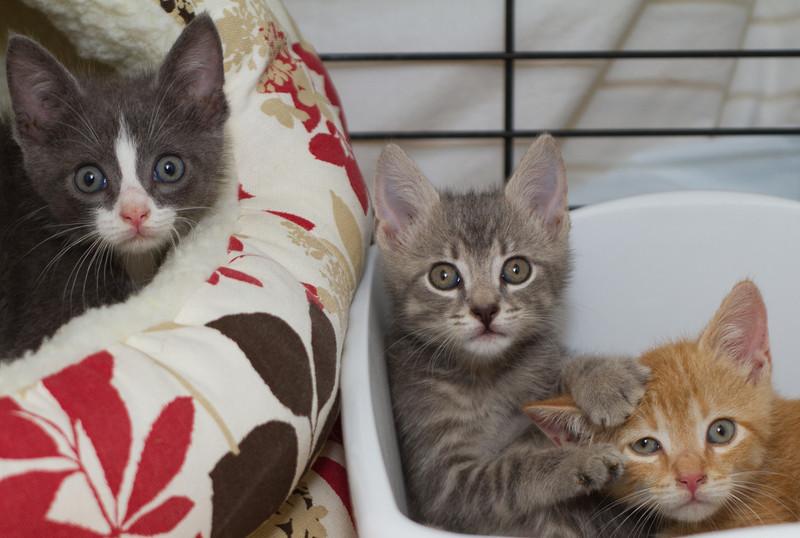 Eddie, Ellie and Rusty (L to R)
