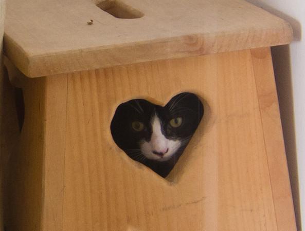 Clara, at Cat's Cradle