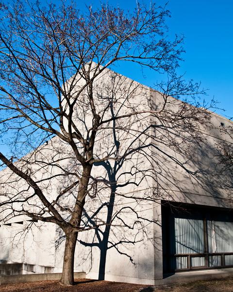 A tree and its shadow. II