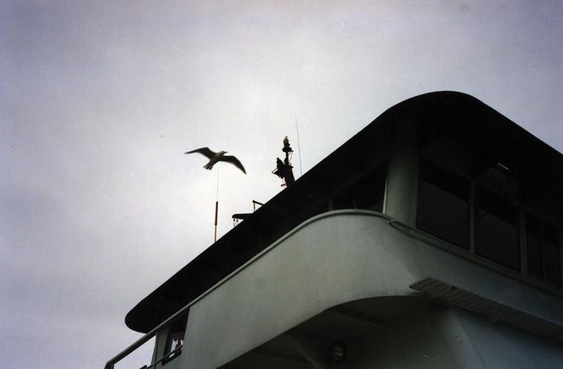 58 Seagull and Bridge