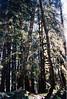 31 Forest Primeval