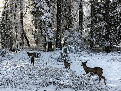 a walk with deers