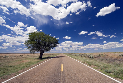 One-Tree-in-New-Mexico