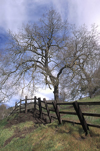 Tree-by-Fence