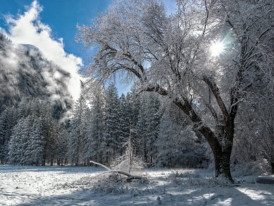 snowy tree and steaming mountian