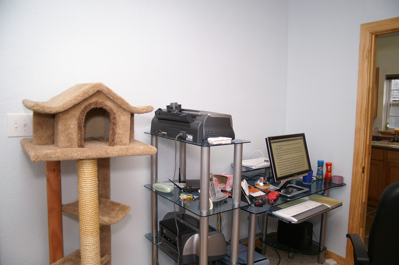 My office showing the notorious expensive cat tree and the blue tempered glass office furniture.