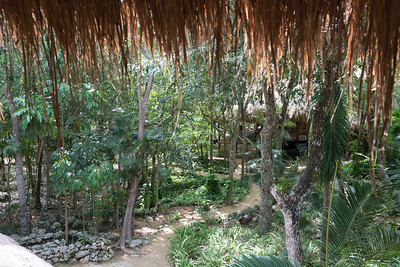 The Jungle Place Spider Monkey Sanctuary