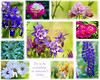 Collage of flowers from the house of a sweet little old lady who shared. <br>Try to be a rainbow in someone's cloud.  Maya Angelou