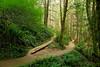 Drift Creek Falls trail near Lincoln City, Oregon