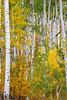 Uncaged Woods