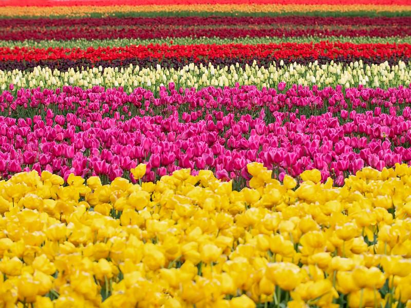 Blossoms 'n Stripes