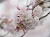 Genteel Spring