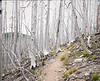 Vista Ridge Trail on Mt. Hood, Oregon