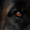 The eye of the Lion...