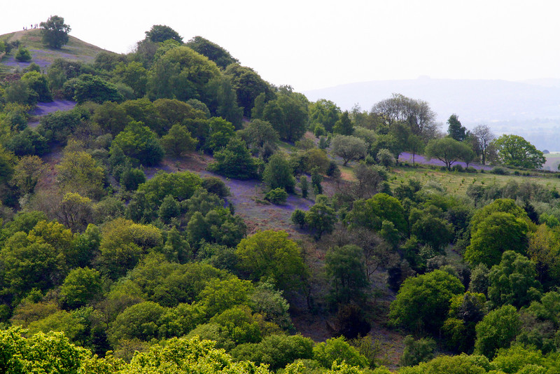 The blue tinge to the hillside is due to the millions of Bluebells flowering there.