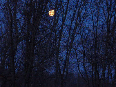 moon in trees