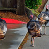 Some of my neighbors are real turkeys.
