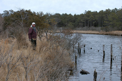 Near where Mac Simpson is standing was the location of Green Run Lodge........The pilings are  the remains of the dock you see in the first photo. This location was rather difficult to find as our search brought us up on the south side of the creek, the walk around was tough.....notice the vegetation (across the creek)in the first gallery shot compared to the trees in this shot...that is over 50 years of growth.