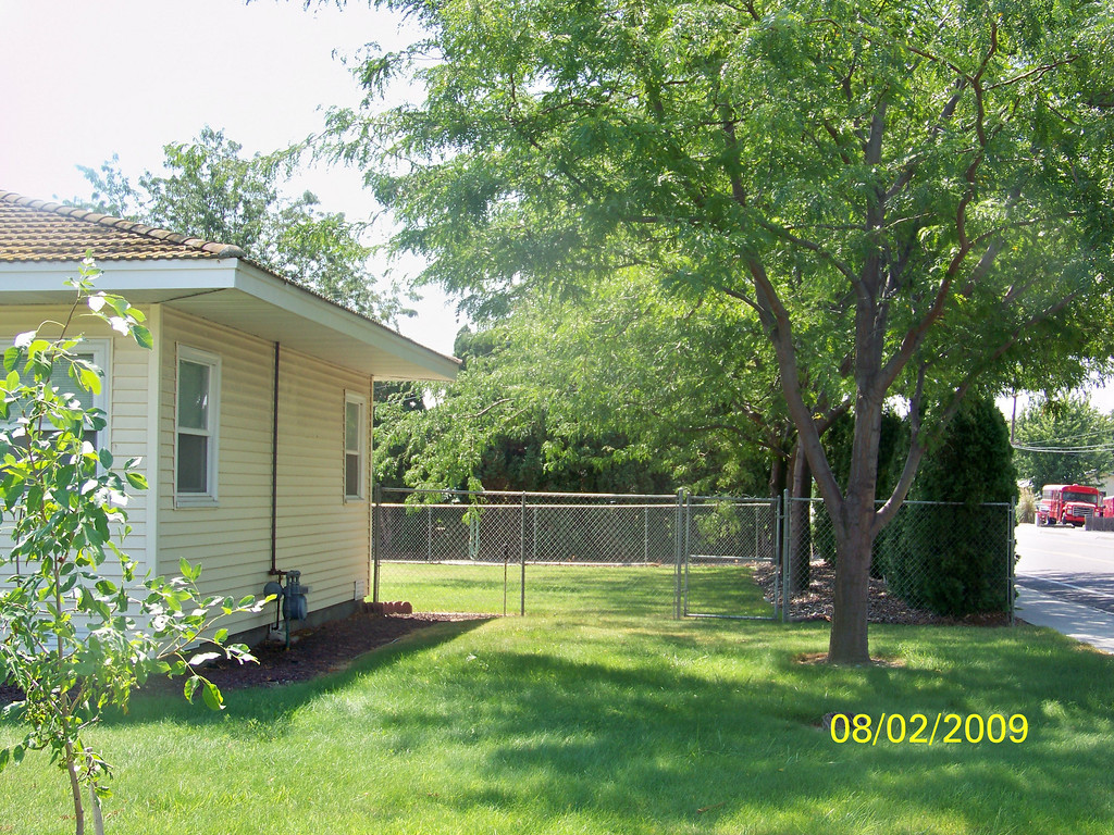 2025 W. 15th side yard - no apricot trees....