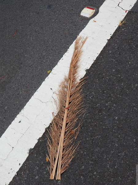 The Frond on the Road Marking
