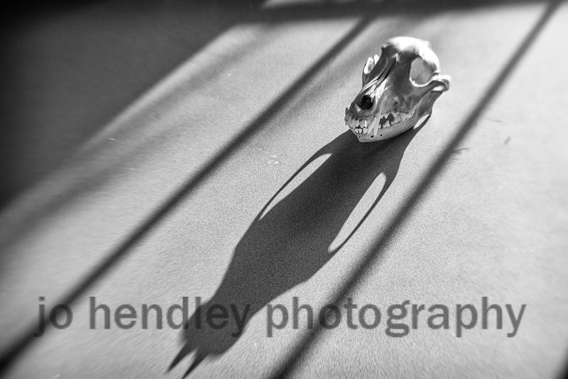 K9 Skull (Lurcher)