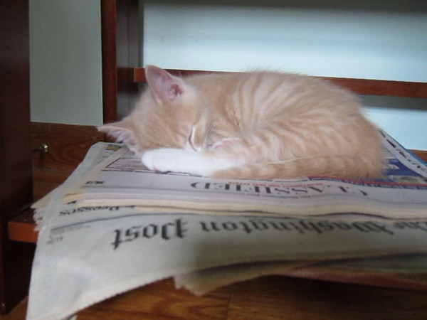 Purball.  Listen to him...he even purrs while sleeping!<br /> 8 weeks old.