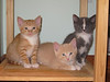 Blaze, Purrball & Badger (left to right.)
