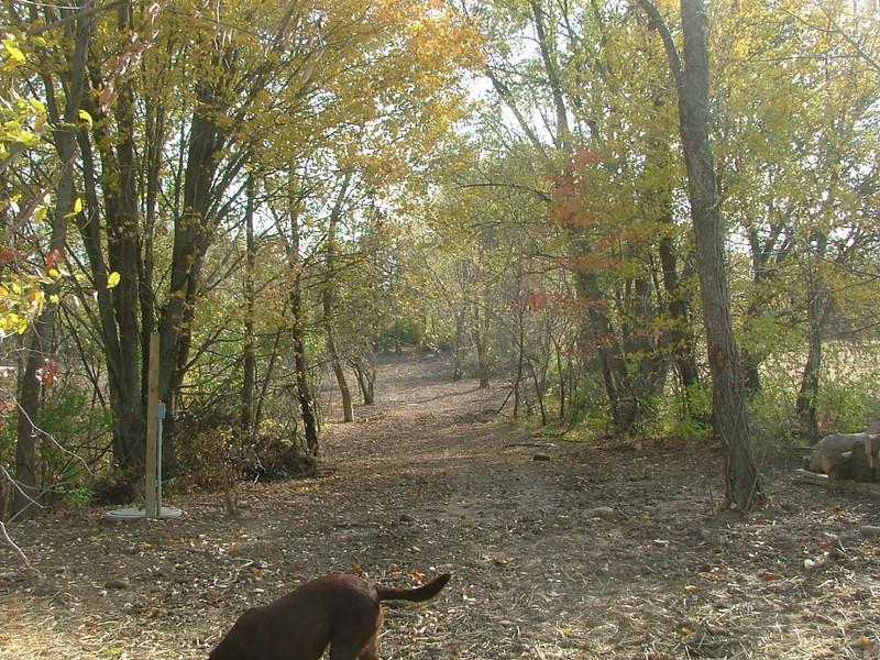 Path to the Backyard!