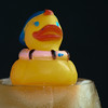 Cold Duck #5