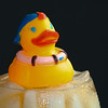 Cold duck #7